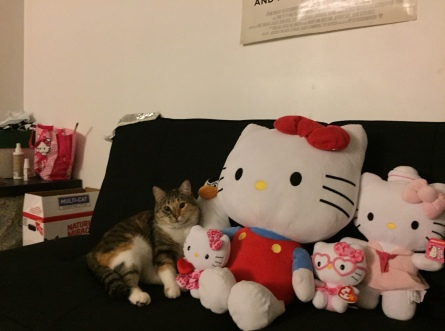 Hanging out with her kitty krew.